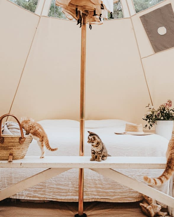 living in a bell tent with kittens