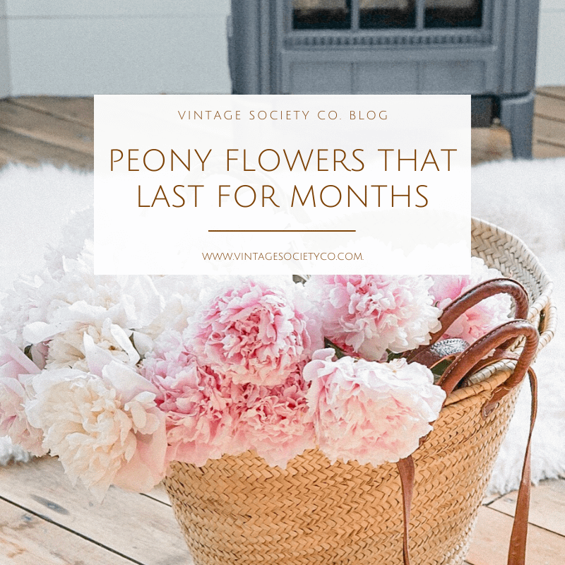 Peony Flowers that last for months
