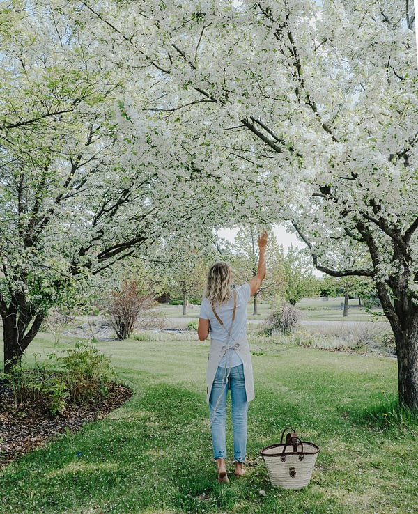 Linen Apron and Apple Blossoms