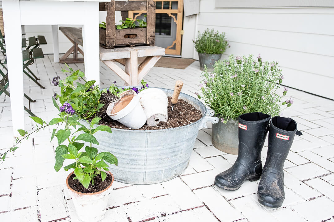 great gardening plants on white brick patio