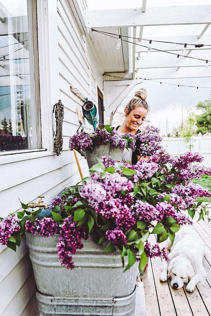 galvanized sink wash tub full of lilacs